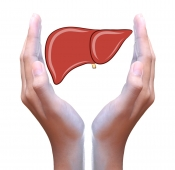 Các món ăn tốt cho gan cần bổ sung để bảo vệ vệ sức khỏe gan